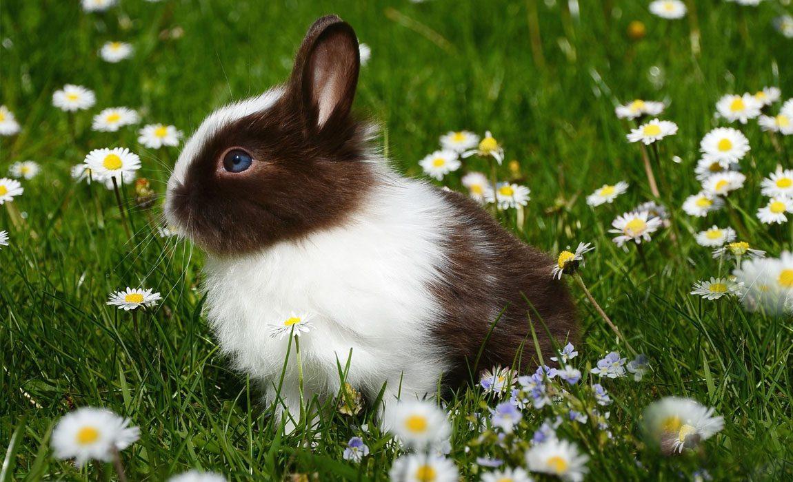 kaninchen impfnachmittag gegen rhd v 1 2 kleintierspezialisten bergedorf praxis dr ulrike. Black Bedroom Furniture Sets. Home Design Ideas